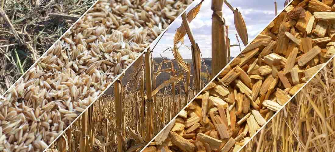 Wood Biomass Residue