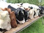 Wood - Biomass - Animal Feed - Pellet Mill